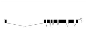 exon-intron graphic maker