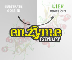 Enzyme Corner: Nanoparticles and Proteins, Part I