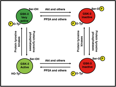 Make Up Your Mind When Phosphorylation Turns Enzymes Quot On